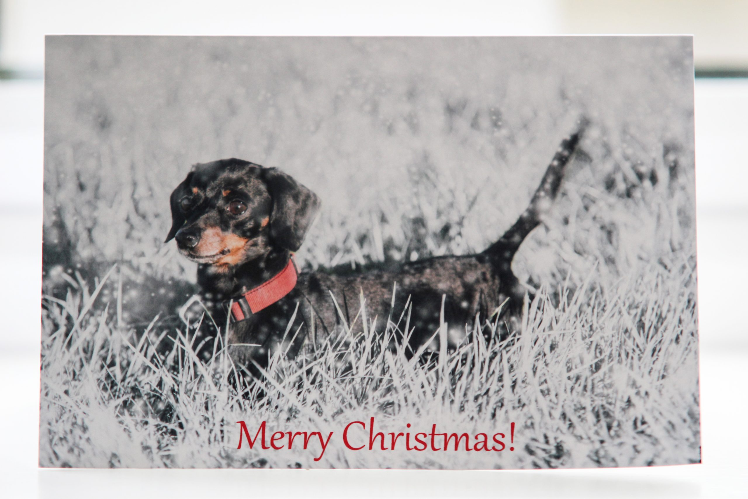 Personalised Christmas Cards with your own images and a snowy background