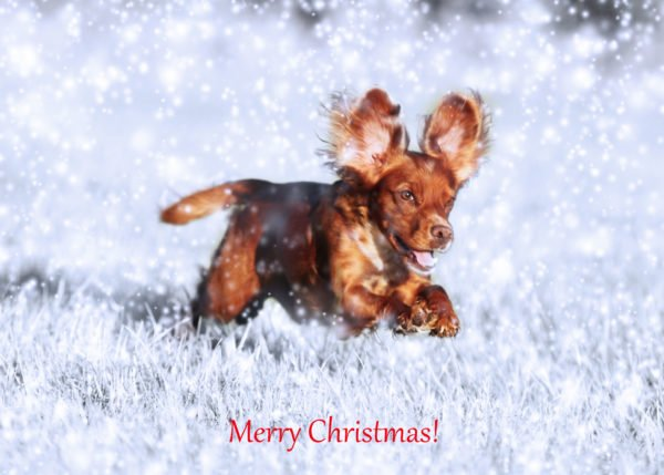 Personalised Christmas Cards with your own images and a snowy background.