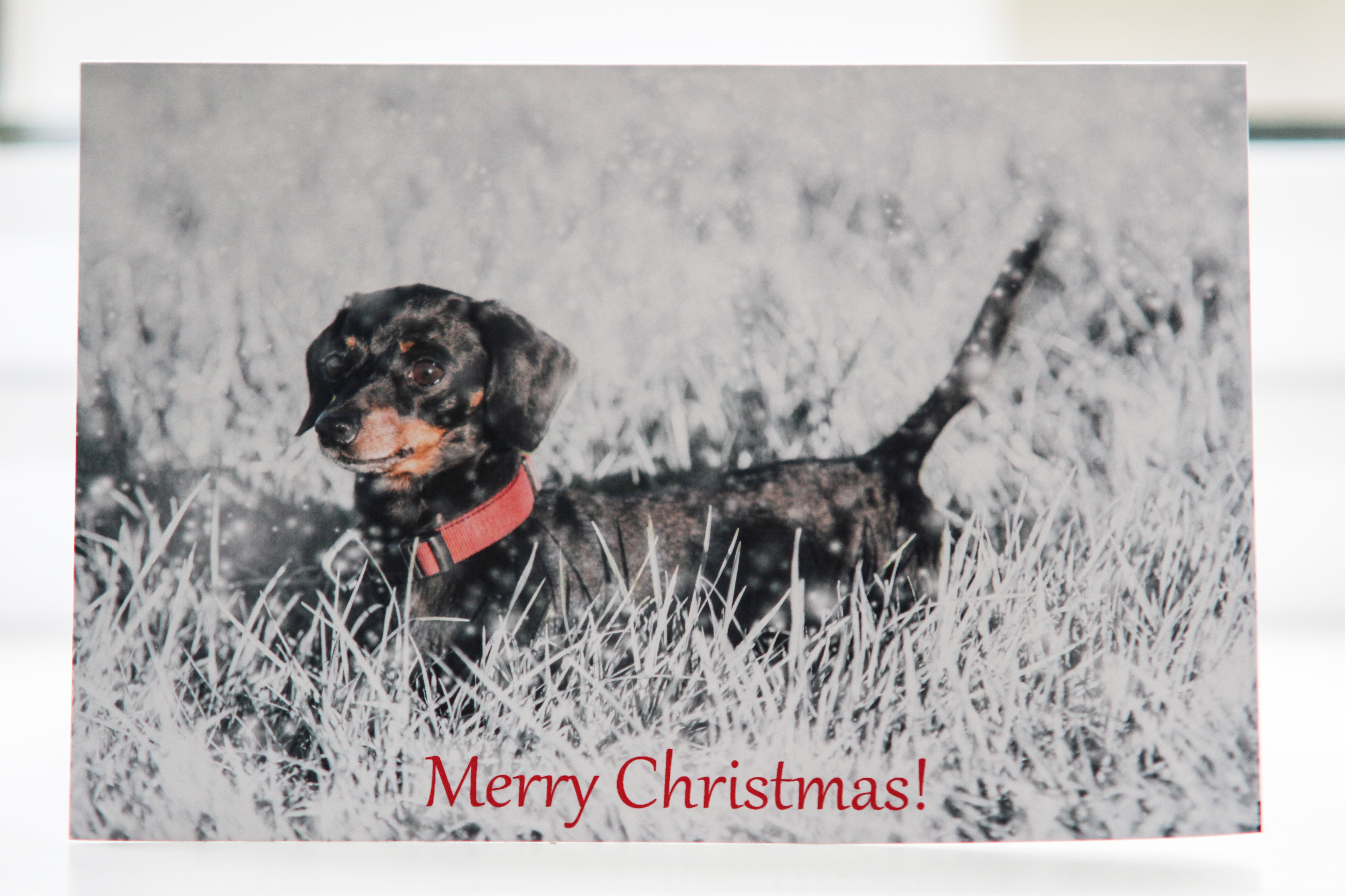 HoofPrints- Create your Personalised Christmas Cards Today